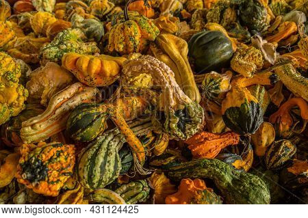 Assortment Of Unique Shapes And Sizes Of Gourds Together In A Pile For The Autumn Holidays For Sale