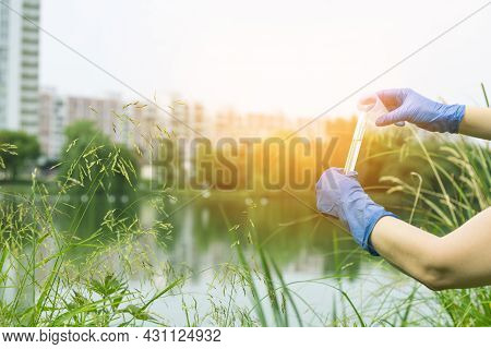 A Gloved Hand Collects Water Into A Test Tube. Sampling From Open Water In A City Water Body. Scient