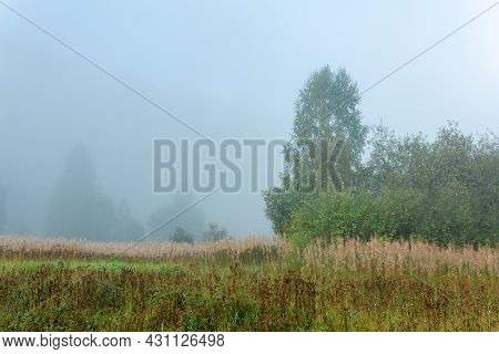 Wild Forest Glade With Autumn Grass In The Morning Haze