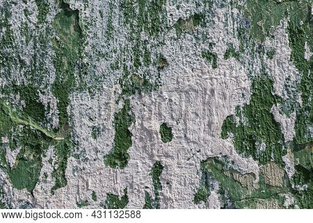 Shabby Peeling Off Green Paint Wall With White Plaster Smudges