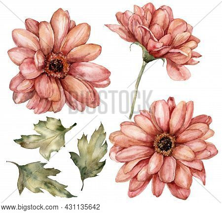 Watercolor Floral Set Of Aster Flowers And Leaves. Hand Painted Genus Isolated On White Background.