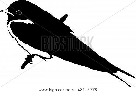 vector silhouette of the bird series, swallow poster