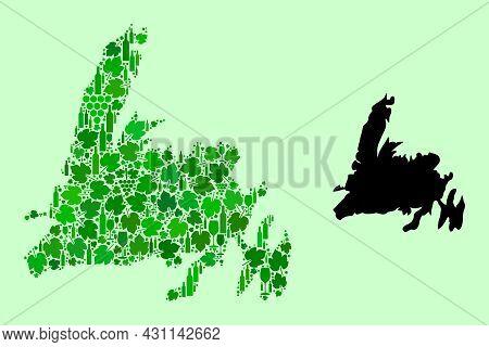 Vector Map Of Newfoundland Island. Mosaic Of Green Grapes, Wine Bottles. Map Of Newfoundland Island