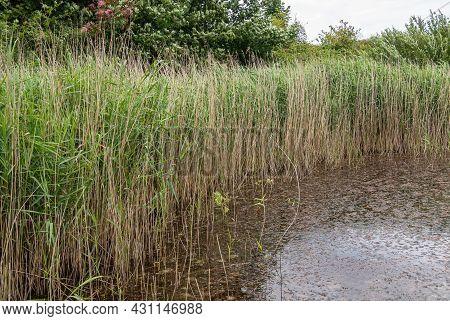 Knokke-heist, Flanders, Belgium - August 6, 2021: Zwin Nature Reserve. Pond With Dark Water And Clos