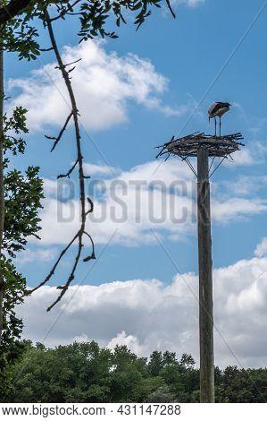 Knokke-heist, Flanders, Belgium - August 6, 2021: Zwin Nature Reserve. Stork Seems To Start Making N