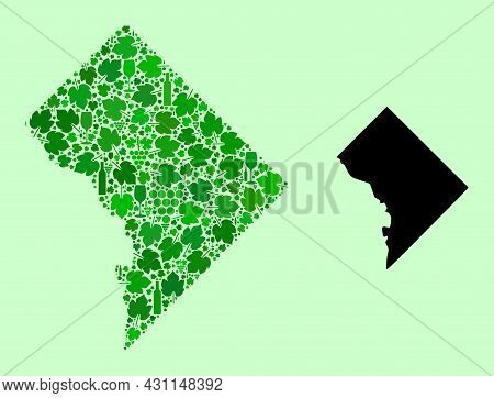 Vector Map Of Washington Dc. Composition Of Green Grapes, Wine Bottles. Map Of Washington Dc Collage