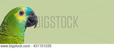 head shot Side view of Turquoise-fronted amazon against green pastel background