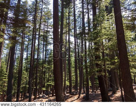 Forest In The Ushu Valley Of Kalam Swat