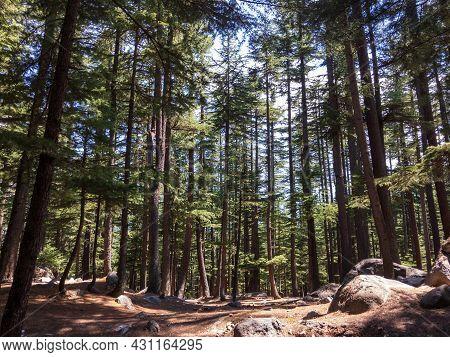 Beautiful Deodar Forest In Ushu Kalam Swat Valley