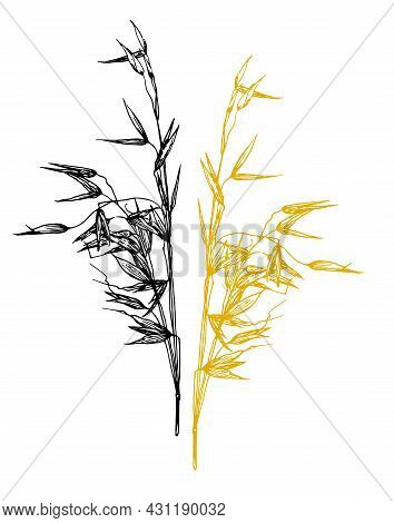 Vector Set Of Oats Plant. A Spikelet With Oat Seeds Drawn In A Sketch Style, Black And Yellow Isolat