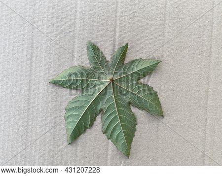 Leaf Of The Castor Plant, On A Gray Background, Cardboard