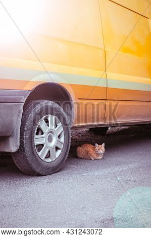 Red Cat Under Orange Car In The Summer. Yellow Striped Retro Van With Sunbeams. Beautiful, Stray, Se