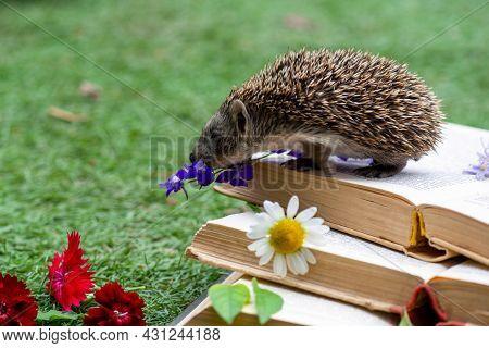 A Hedgehog Sniffs A Blue Flower On A Book