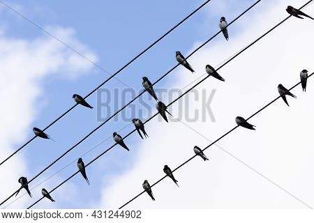Barn Swallow Are On Electric Wires, Silhouette Photo Over Cloudy Sky Background