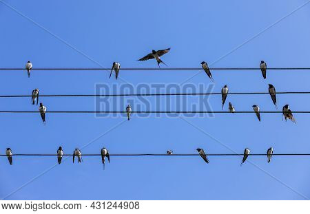 Swallows Are On Wires, Silhouette Photo Over Blue Sky Background