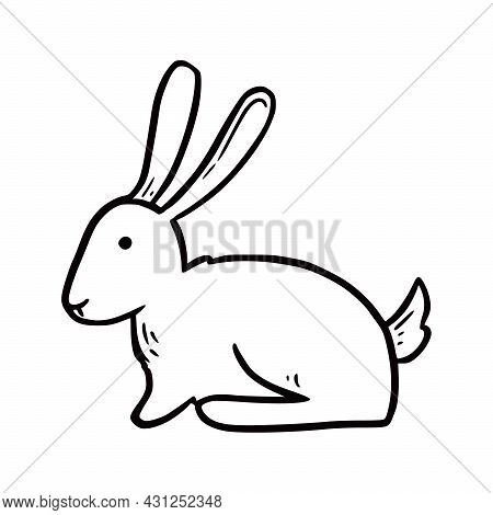 Hand Drawn Farm Rabbit. Doodle Sketch Style. Drawing Line Simple Rabbit Icon. Isolated Vector Illust