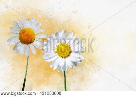 White Daisy Flowers. Watercolor Background Illustration Set. Isolated Daisies Illustration Element.