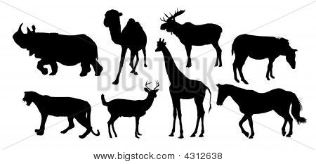 silhouettes of various animals on white background poster