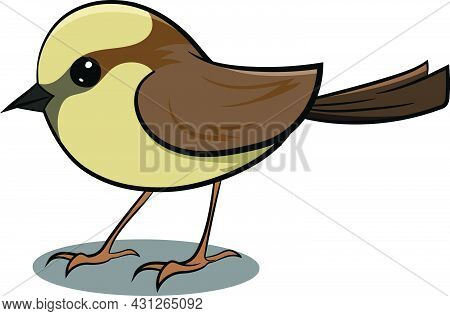 Brown Sparrow Flying In Air. Cute Brown Bird. Birds From Different Parts Of World. Common Birds. Bir