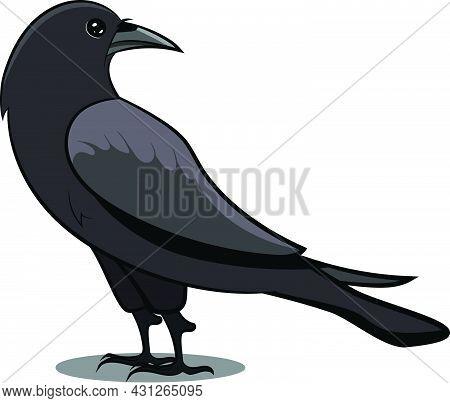 Black Crow With Shadow. Black Bird. Birds From Different Parts Of World. Common Birds. Bird Icon Vec