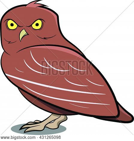 Night Owl Standing With Shadow. Night Birds. Birds From Different Parts Of World. Common Birds. Bird