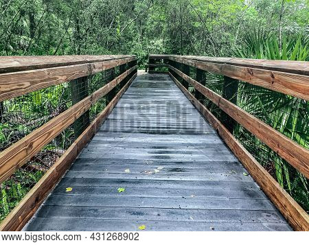 Elevated wooden boardwalk for hiking in Rainbow Springs