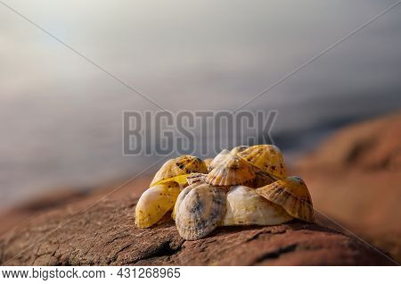 Clams Sea Shells, With Beautiful Light And Ocean Sea Background