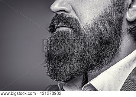 Bearded Man Close Up. Beard Is His Style. Closeup Of Bearded Mans. Male With Mustache Growing. Black