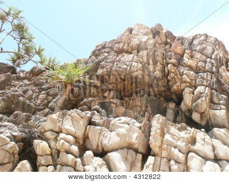 Volcanic Rock Formations Pandanas Palms At Little Bay Sw Rocks Nsw Australia