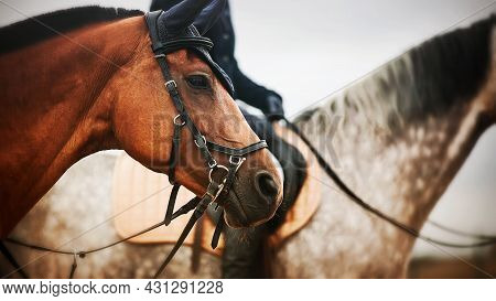 Portrait Of A Beautiful Bay Horse With A Dark Mane, Against Which There Is Another Horse With A Ride