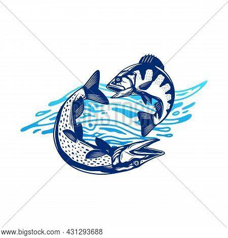 Fish Illustration With Water Splashe