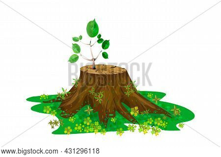 Young Branch On The Stump Isolated On White Background. New Sprout On Tree Trunk. One New Seedling I