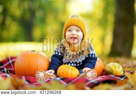 Cute Small Baby Boy Sitting Near Small Colourful Pumpkins On Sunny Autumn Day. Family Time At Thanks