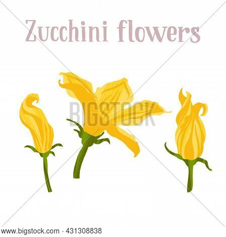 Young Yellow Zucchini Flowers. Different Inflorescences Courgette.