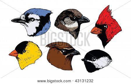 Songbird Heads