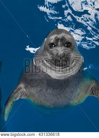 Real Seal Emerged From The Dark Blue Transparent Water. The Baikal Seal Or Pusa Sibirika Looks From