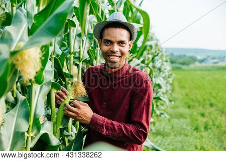 Portrait Of Happy Young Afro American Farmer Standing In Corn Field Examining Corn Is Affected By Pe