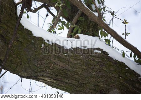 Snow Along Tree Limbs On A Grey Day