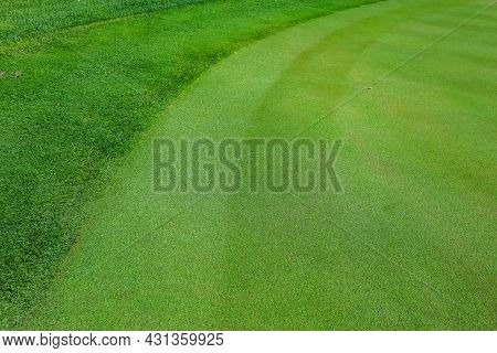 Natural Grass In A Golf Field Top View