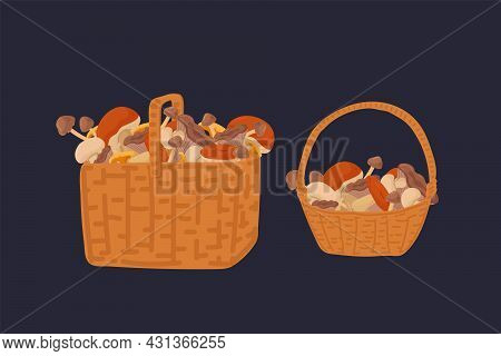 A Set Of Baskets With Wild Mushrooms. Mushrooms In Wicker Baskets A Collection Of Edible Mushrooms O