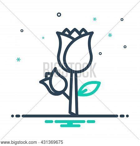 Mix Icon For Rose Rosebush Rosa Petals Musk-rose Symbol-of-love Horticulture Decoration Flower Colrf