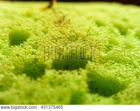 Selective Focus Surface Of Dirty Green Dish Washcloth With Leftover Food. Macroshot Texture Of Porou