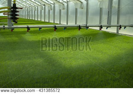 A Greenhouse For Growing Plants And Trees. Irrigation Technology In The Greenhouse.