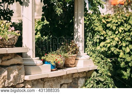 Potted Houseplants, Blossoming Flowers On A Stone Vintage Porch In Summertime