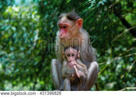 The Mother Monkey And Her Baby, Animal Photography, Wildlife Photography