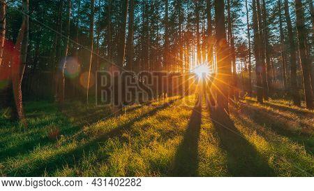 Sunset Sunrise Sun Sunshine In Sunny Summer Coniferous Forest. Sunlight Sunbeams Through Woods In Fo