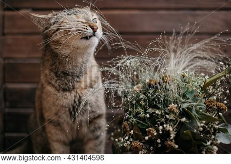Domestic Ginger Cat Sniffs A Bouquet Of Wilted Flowers.
