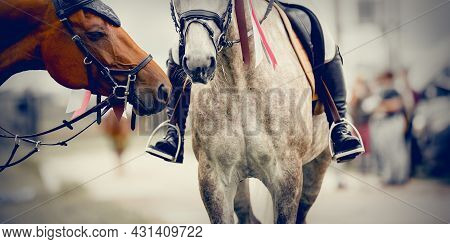 The Muzzles Of Two Horses Of The Winners Of The Competition. Portrait Sports Stallions In The Bridle