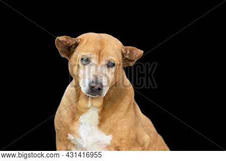 Old Dog Mixed Breed On Black Background With Clipping Path
