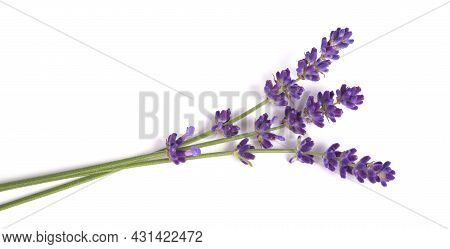 Lavender Flowers  Isolated On A White Background